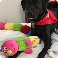 Adopt A Pet :: Ace - Torrance, CA