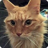 Adopt A Pet :: Orlando - Troy, MI
