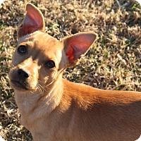 Adopt A Pet :: Franklin - Henderson, NV