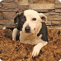 Adopt A Pet :: Mojito - Waldorf, MD