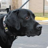 Adopt A Pet :: Jack - Towson, MD