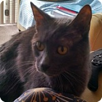 Adopt A Pet :: Loki - McHenry, IL