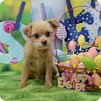 Adopt A Pet :: April Ranger - Urbana, OH
