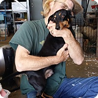 Adopt A Pet :: BRUNO - Lubbock, TX