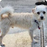 Adopt A Pet :: Miso D4133 - Fremont, CA