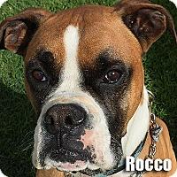 Adopt A Pet :: Rocco - Encino, CA