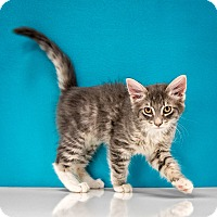 Adopt A Pet :: Jaime - Chandler, AZ