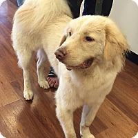 Adopt A Pet :: Ted - Ocean Ridge, FL