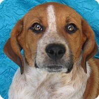 Collie/Spaniel (Unknown Type) Mix Dog for adoption in Cuba, New York - Jamilynn Roscoe