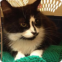 Adopt A Pet :: Ava - Richmond Hill, ON