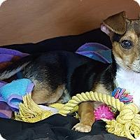 Adopt A Pet :: Max - Deer Park, TX