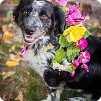 Adopt A Pet :: Delaney - Salt Lake City, UT