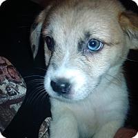 Adopt A Pet :: curtis - Kendall, NY