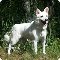 Adopt A Pet :: Elena - Canterbury, CT