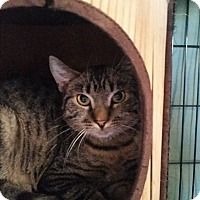 Adopt A Pet :: Angus - Virginia Beach, VA