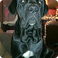 Adopt A Pet :: Rudy - Chambersburg, PA