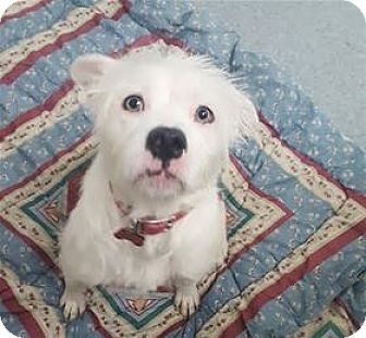 Terrier (Unknown Type, Medium) Mix Dog for adoption in Raleigh, North Carolina - Jilly