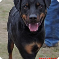 Adopt A Pet :: Duke (95 lb) Big, Sweet Boy! - Williamsport, MD