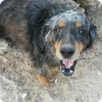 Adopt A Pet :: Marble - Von Ormy, TX
