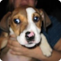 Adopt A Pet :: Leonard - South Jersey, NJ