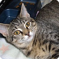 Adopt A Pet :: Babe - Richmond, VA