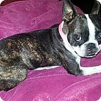 Adopt A Pet :: *Zoey - PENDING - Westport, CT