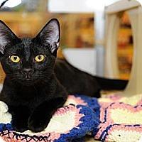 Adopt A Pet :: Katrina - Farmingdale, NY