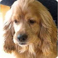 Adopt A Pet :: Doogie #2 - San Diego, CA