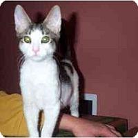 Adopt A Pet :: Stripe - Jenkintown, PA