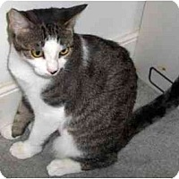Adopt A Pet :: Ally - Richmond, VA
