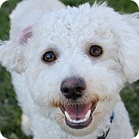 Adopt A Pet :: Jeremy - La Costa, CA