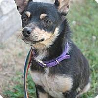 Adopt A Pet :: Jewels - Stilwell, OK
