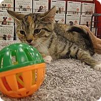 Adopt A Pet :: Cleopatra - Catasauqua, PA