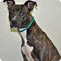 Adopt A Pet :: Mario - Port Washington, NY