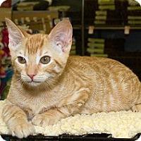 Adopt A Pet :: Frito - Sacramento, CA