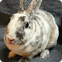 Adopt A Pet :: Divina - Newport, DE