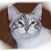 Adopt A Pet :: Luna - Montgomery, IL