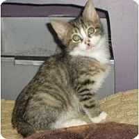 Adopt A Pet :: Hondo - Brea, CA