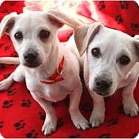 Adopt A Pet :: CHAZ - san diego, CA