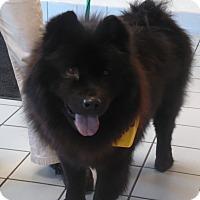 Adopt A Pet :: Pippa - Sacramento, CA