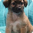 Adopt A Pet :: Kalua
