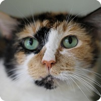 Adopt A Pet :: Gioconda - Chicago, IL