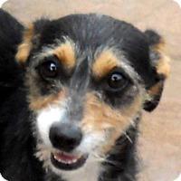 Adopt A Pet :: Sadie - Oakley, CA