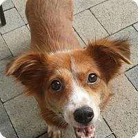 Adopt A Pet :: Renee - Buena Park, CA