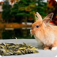 Adopt A Pet :: Amalie - Marietta, GA