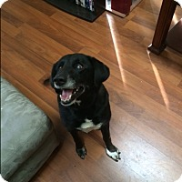Adopt A Pet :: Jack - Lewisville, IN