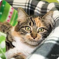 Adopt A Pet :: Reagon - Neenah, WI