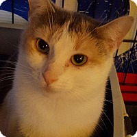 Adopt A Pet :: Joy - New Bedford, MA