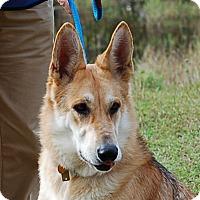 Adopt A Pet :: Dozier AD 01-23-16 - Preston, CT