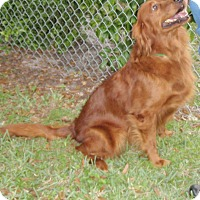 Adopt A Pet :: Sherry - Murdock, FL